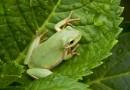 Притча за жабата