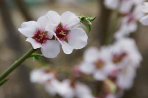 Сред пролетни аромати :)